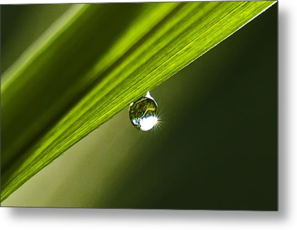 Dewdrop On A Blade Of Grass Metal Print by Michael Whitaker