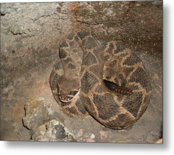 Diamondback Rattlesnake Metal Print by Warren Thompson