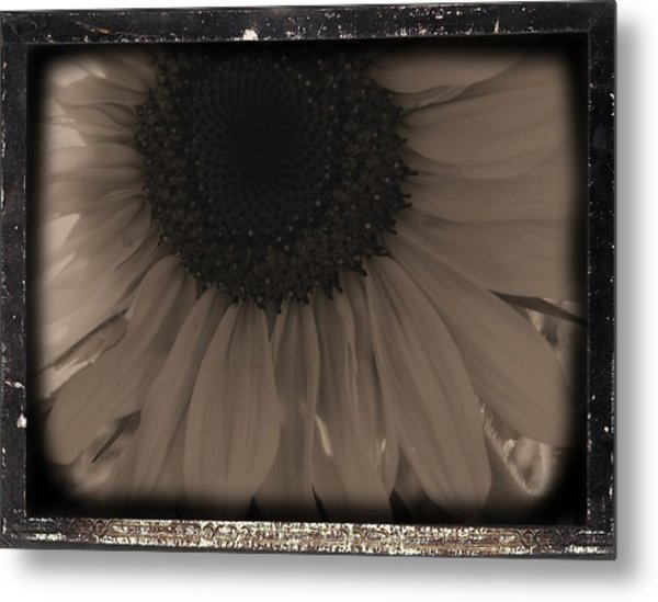 Diatrop Three Quarter Sunflower Metal Print