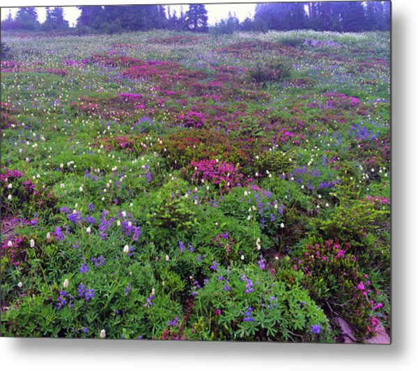 Dickerman Floral Meadow Metal Print