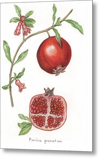Dissection Of A Pomegranate Metal Print