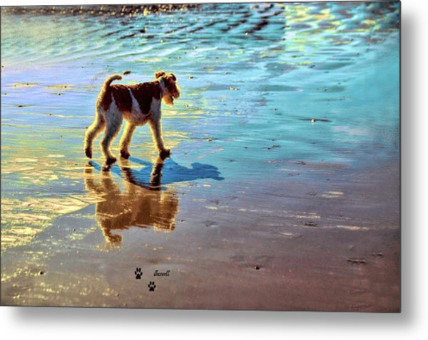 Doggone Beachy Day Metal Print