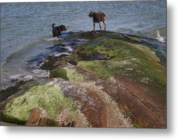 Dogs On The Rocks Metal Print by Rose Martin