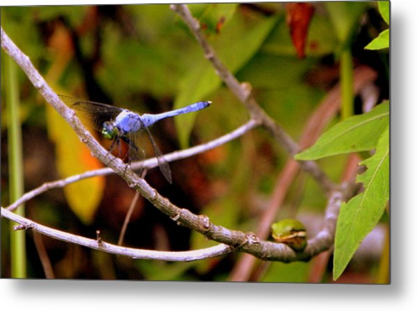 Dragonfly And Tree Frog Metal Print