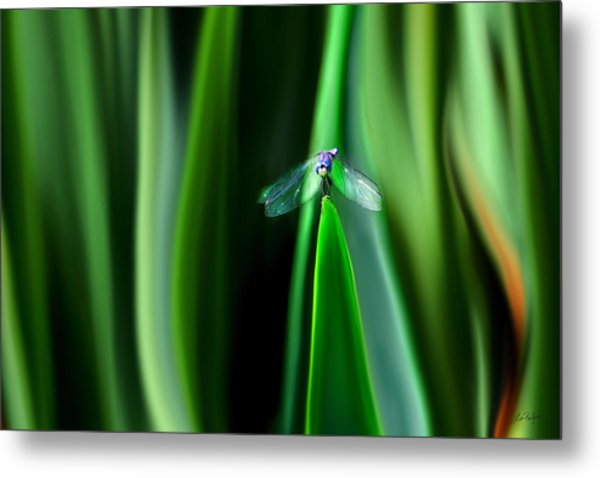 Dragonfly Meditation Metal Print