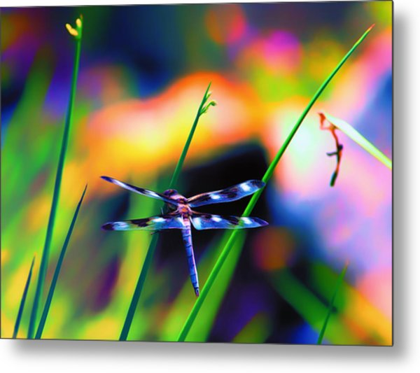 Dragonfly On Pastels Metal Print