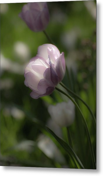 Dream Tulip Metal Print