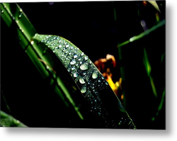 Droplets Of Water Metal Print by Robert Scauzillo