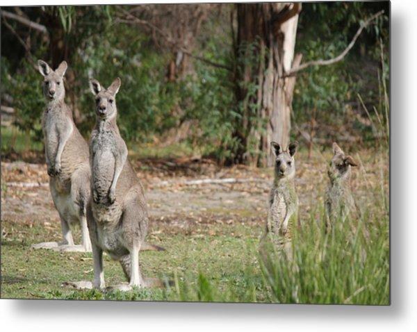 Eastern Grey Kangaroo Family Metal Print by Roo Printz
