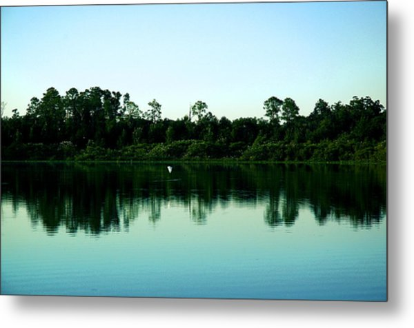 Egret And Rookery Metal Print