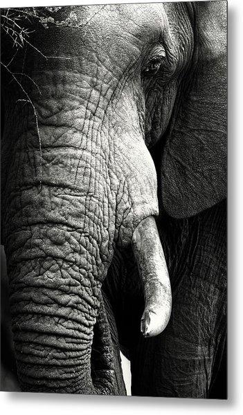 Elephant Close-up Portrait Metal Print