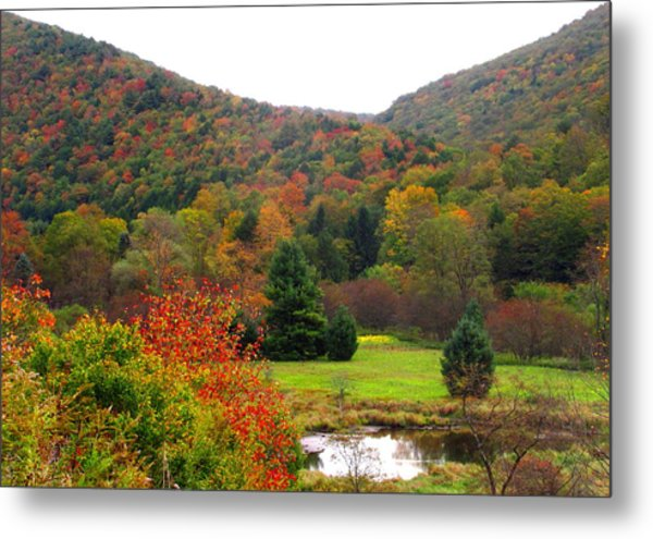 Elk Country Pennsylvania Metal Print