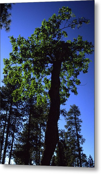 Emerald Oak Metal Print