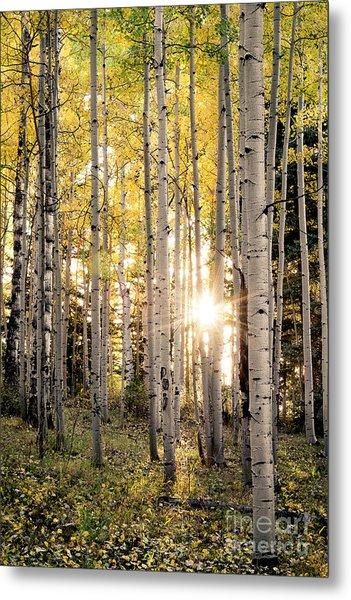 Evening In An Aspen Woods Vertical Metal Print