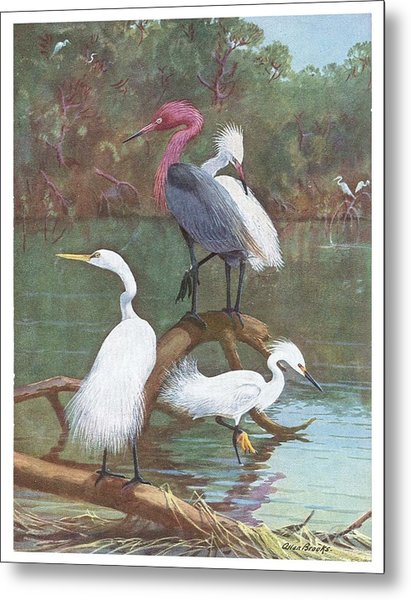 Exotic Birds Ll Metal Print by David  Hicks