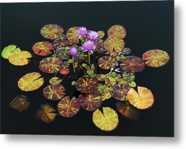 Exotic Lilies Metal Print by Kurt Shaffer