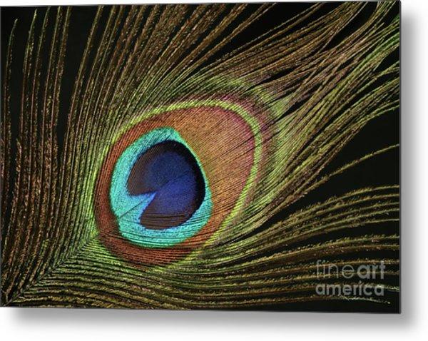 Eye Of The Peacock #11 Metal Print