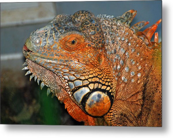 Face A Mother Can Love Metal Print by Teresa Blanton