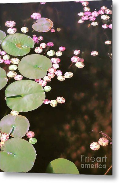 Fading Lily Pads Metal Print
