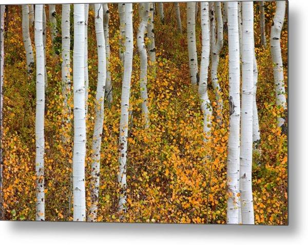 Fall Color Metal Print by Dori Peers
