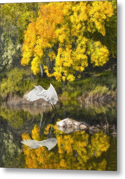 Fall Reflections Metal Print by Chuck Brittenham