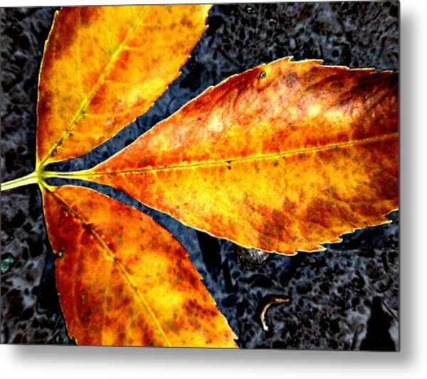 Fallen Leaves Metal Print by Beth Akerman