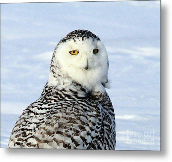 Female Snowy Owl Metal Print