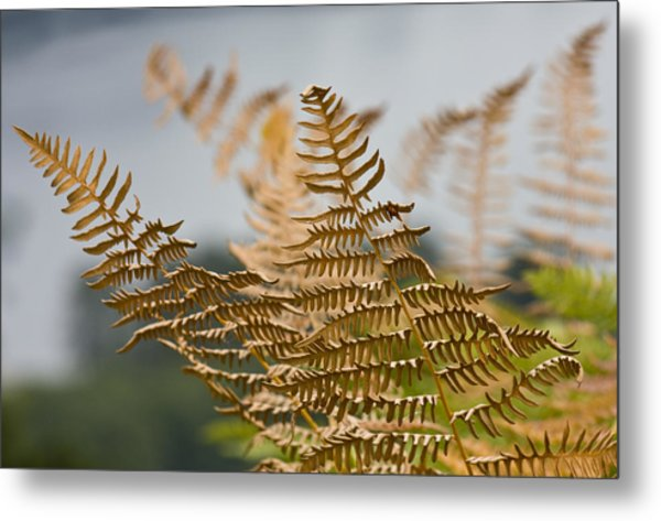Ferns Growing By The River Metal Print by Barbara  White