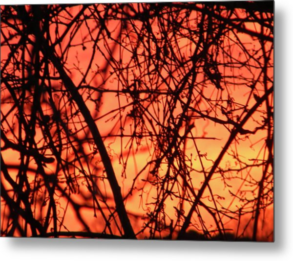 Fire Metal Print by Cassandra Donnelly