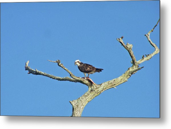 Fishing From The Sky Metal Print by Cheryl Allin