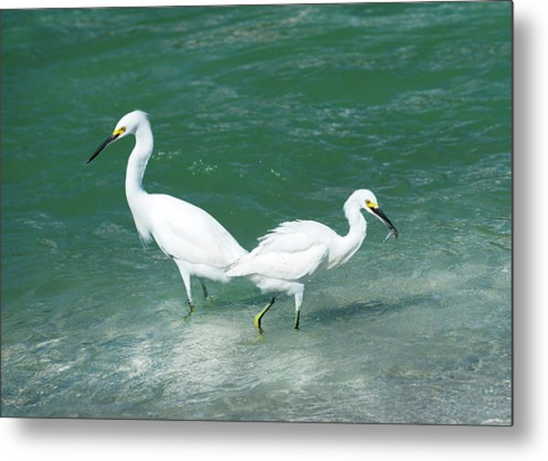 Fishing  Metal Print
