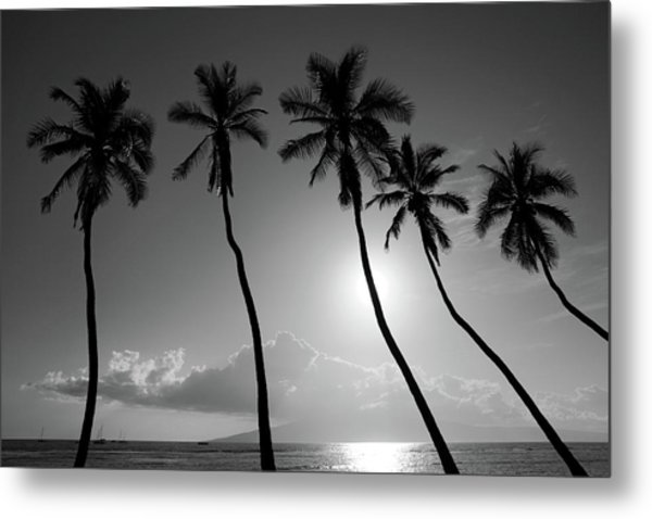 Five Coconut Palms Metal Print