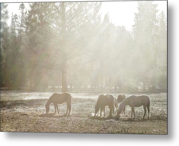 Five Horses In The Mist Metal Print