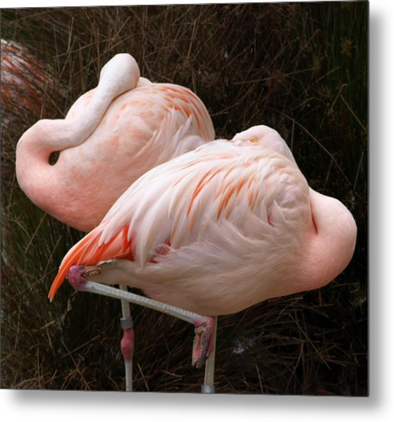 Flamingo Siesta Metal Print by Laura Allenby