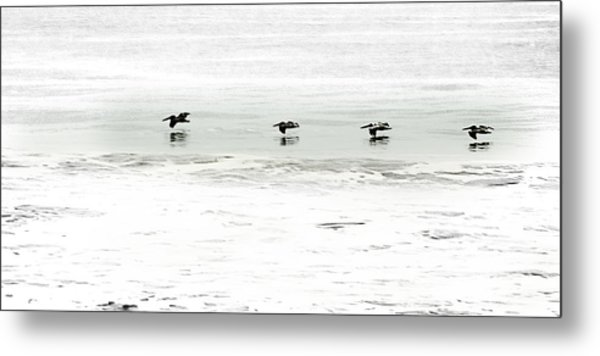 Flight - Sea Of Cortez Metal Print by Clyde Replogle