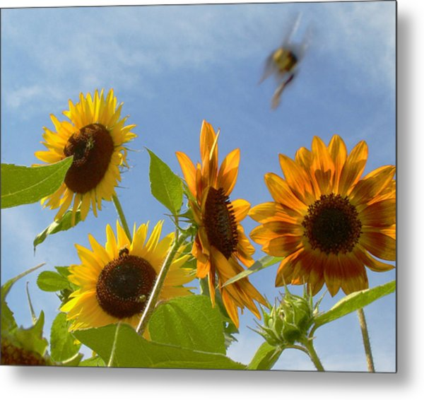 Flight Of The Bubble Bee Metal Print by Julie Geiss