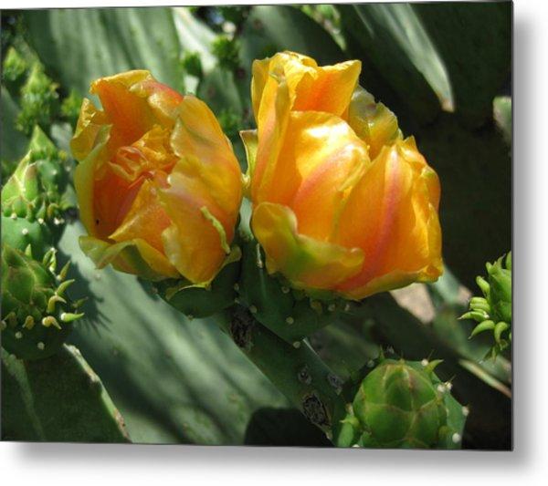 Flores De Cactus Metal Print by Diana Moya