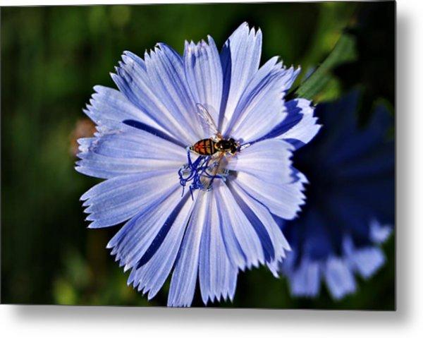 Flower And Bee 2 Metal Print