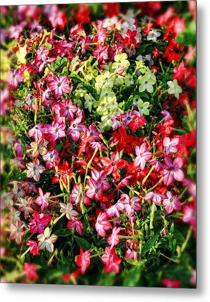 Flower Garden 1 Metal Print