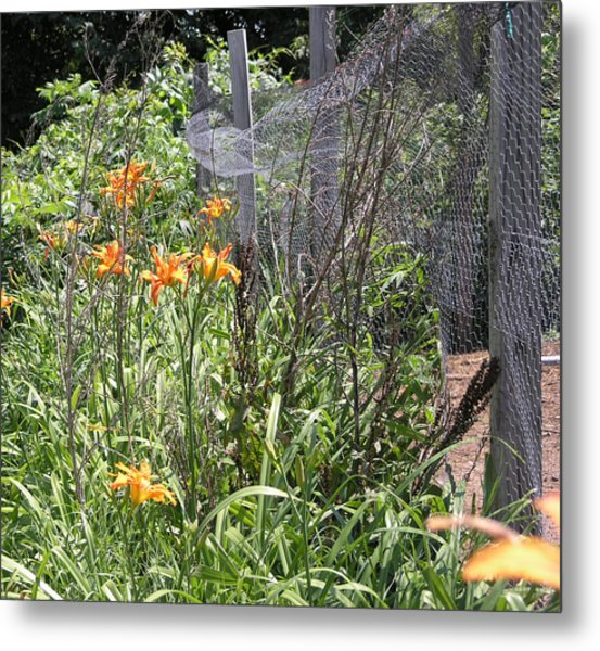 Flowers At The Farm Metal Print by Janis Beauchamp