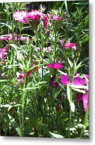 Flowers In The Garden Vii Metal Print by Daniel Henning