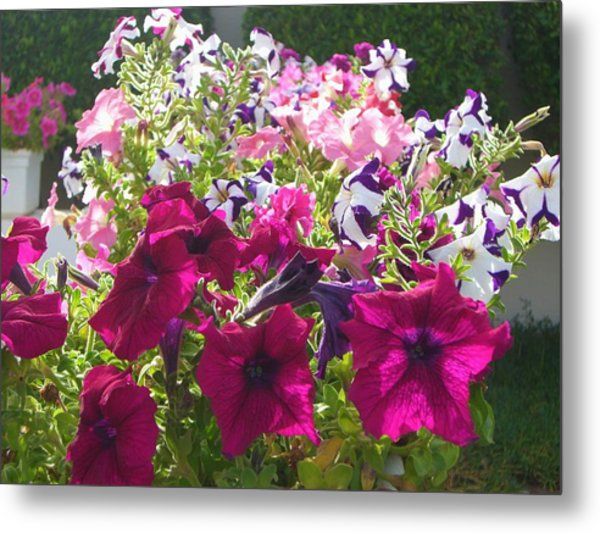 Flowers Really Do Smile Metal Print by Sunaina Serna Ahluwalia