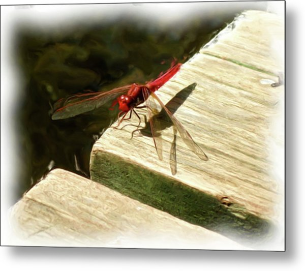 Flying Dragon At Rest Metal Print