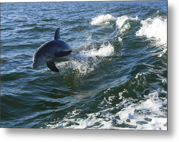 Flying Metal Print by Tara Moorman Photography
