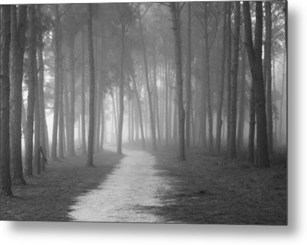 Fog In The Forest Metal Print by Gary Bydlo