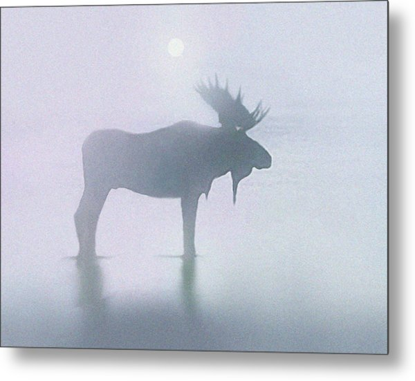 Fog Moose Metal Print