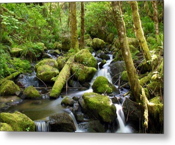 Forest Creek Metal Print