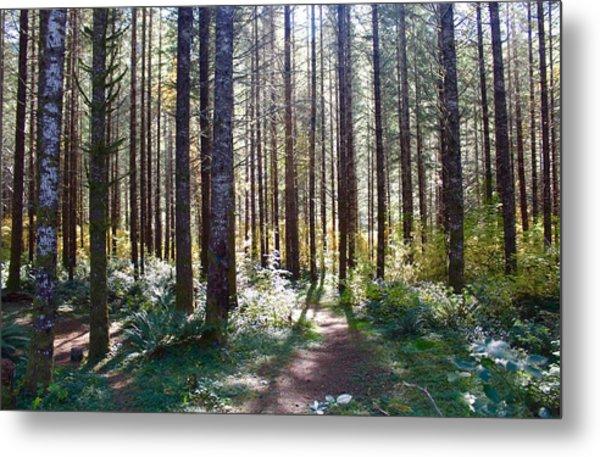 Forest Stroll Metal Print