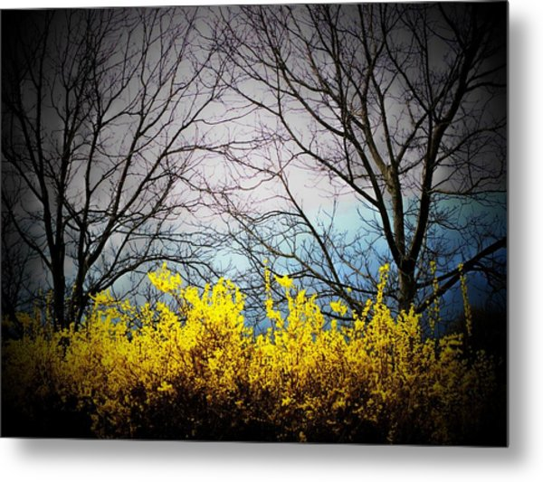 Forsythia By The Mountains Metal Print by Joyce Kimble Smith