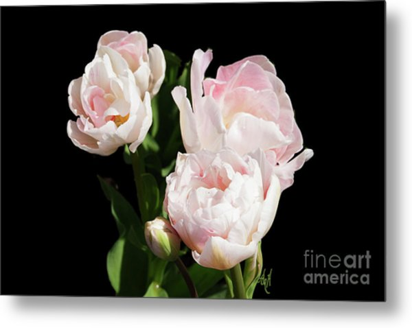 Four Pink Tulips And A Bud On Black Metal Print